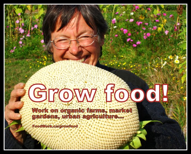 Jobs, internships, volunteering, self employment in local and sustainable food and agriculture. www.FoodWork.ca.